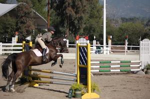 Horses_132